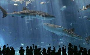 Des spectateurs observent des requins baleines dans le plus grand aquarium du monde à Motobu, Japon, le 9 juillet 2007.