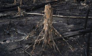 Une arbre brûlé dans la forêt amazonienne le 23 novembre 2019.