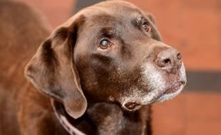 Le cadavre d'un chien de race labrador, âgé de 4 ans, avait alors été repêché dans un bassin de la ville (illustration)