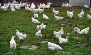 Le gouvernement a interdit l'exportation d'oiseaux vivants et d'oeufs de Dordogne