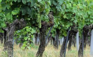 Des vignobles dans l'ouest de la France à Vauchretien
