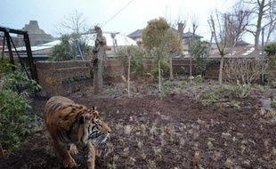 La naissance d'un bébé tigre, le premier à voir le jour au zoo de Londres depuis dix-sept ans, a été filmée en caméra cachée par les gardiens soucieux de ne pas stresser la mère, a annoncé le zoo mercredi.