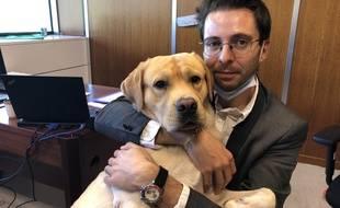 Depuis le mois de juin, la mairie de Grenoble autorise les salariés à venir travailler avec leurs chiens, comme ici Maxence Alloto et son labrador Pixel.