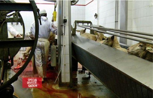 Documentaire : « Halal : Les dessous du business » sur Canal +  648x415_selon-enquecircte-canal-nombreux-produits-halal-nom