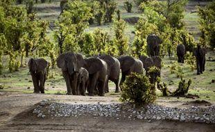 Des éléphants dans le parc national de Hwange, le 17 novembre 2012 au Zimbabwe