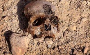 Un crâne retrouvé dans une fosse commune contenant des membres de la communauté yazidie tués par le groupe Etat islamique, le 3 février 2015, près du village irakine de Sinuni, dans la région du Sinjar