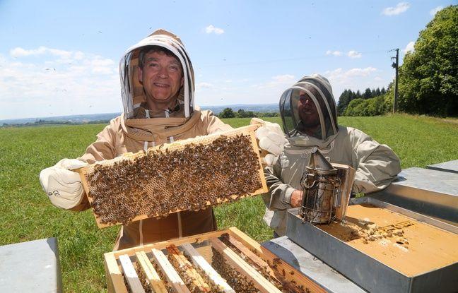 VIDEO. Les infos immanquables du jour: Miel made in Montebourg, oreille arrachée et poissons moches mais utiles