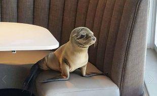 Otarie au restaurant de San Diego.