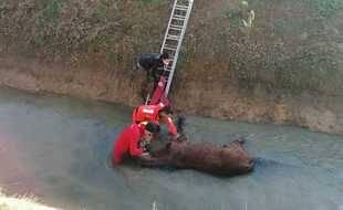 Les pompiers ont vidé le chenal avant de sortir l'équidé au moyen d'un treuil.