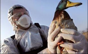 Un deuxième cas de grippe aviaire a été détecté dans un élevage de canards.