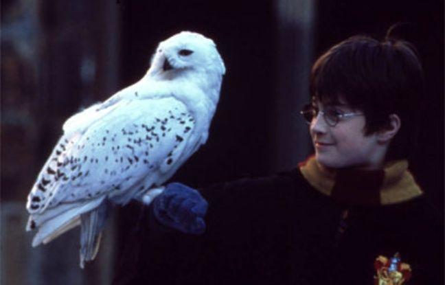 La chouette Hedwige, de son vrai nom Wton, vit dans la campagne anglaise.