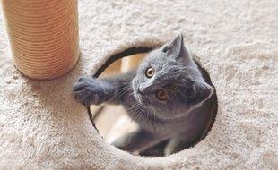 A la fois espace de jeu et de détente, l'arbre à chat répond aux besoins de votre animal de compagnie.