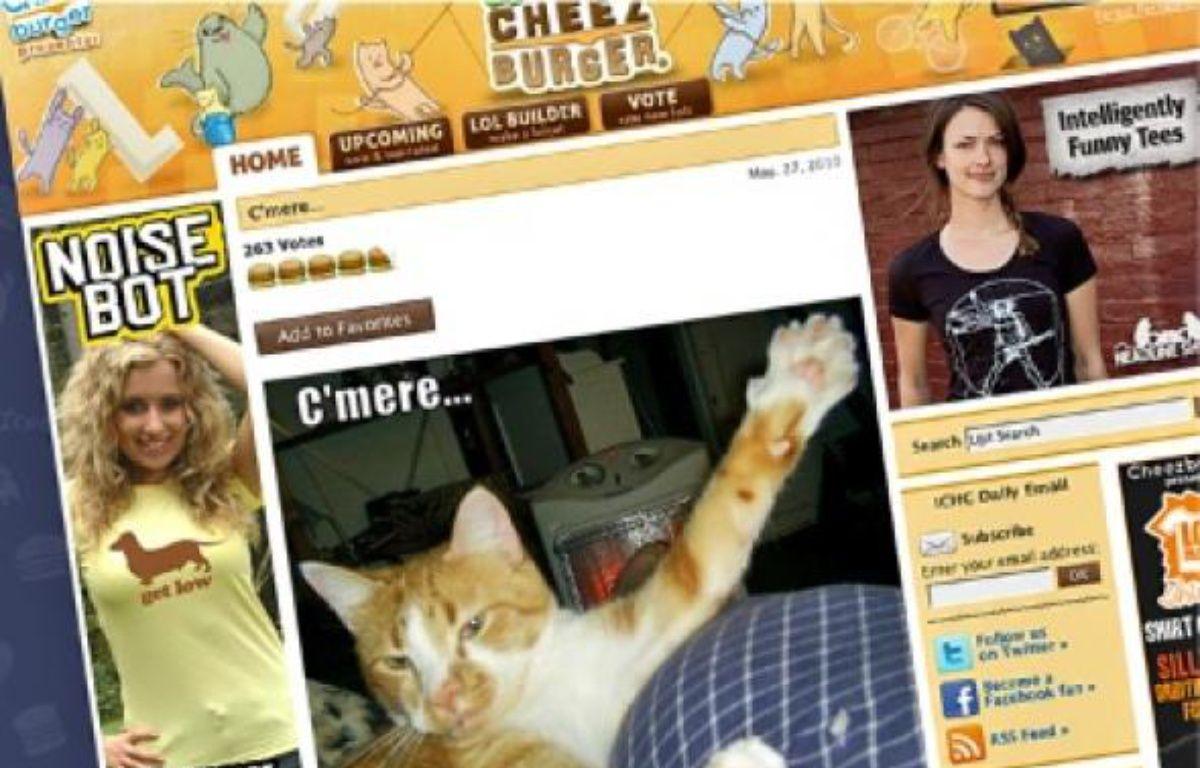 Le chat est aujourd'hui « le truc le plus viral, le plus drôle qui existe sur Internet ». –  dr