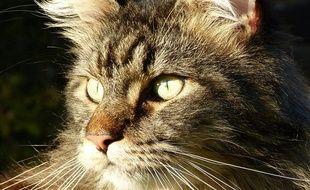 Jupiter, un chat de race Main coon, a été tué d'une balle en pleine tête le 20 février.