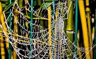 Illustration d'une toile d'araignée avec du givre en hiver.