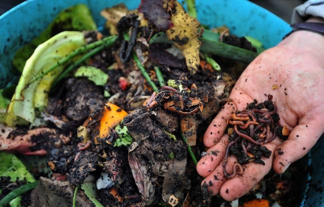 Agriculture urbaine: Il a créé un site pour s'échanger des vers de terre (et ça marche!)