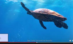 Google a dévoilé, le 4 juin 2015, une nouvelle galerie Street View dediée aux fonds marins