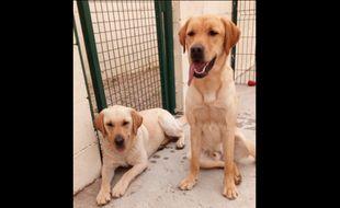 Lully et Natcho ont été retrouvés mercredi après-midi dans l'Ain, ramenés après un appel anonyme.