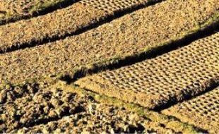 La baisse de la production de riz à Madagascar est inquiétante.