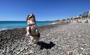 Juliette, le Cavalier king Charles d'Anaïs, est ravie de cette nouvelle plage