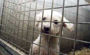12 chiens ont pu être sauvés par les deux associations.