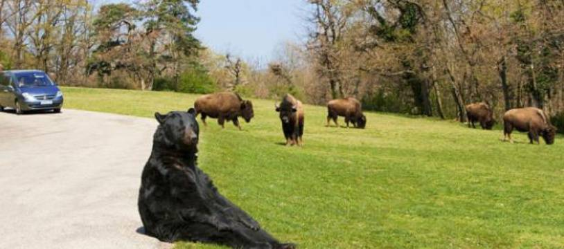 Situé en Ardéche, le safari de Peaugres s'étend sur 80 hectares.