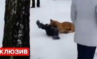 Un lionceau attque un enfant dans un zoo en Russie
