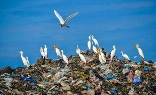 Des aigrettes survolent une pile d'ordures dans un centre de traitement des déchets en Indonésie.