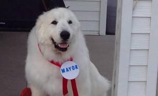 Duke a été élu maire du village de Cormorant, dans le Minnesota.