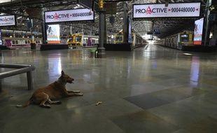 Un chien dans la gare de Bombay, en Inde, qui vient de passer sous le régime du confinement.