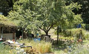 Une parcelle dans les Jardins ouvriers des Vertus à Aubervilliers - Le 9 juin 2021