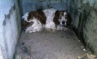 Le chien Dick, dans son ancien local de Maizicourt (80)