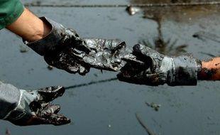 """Une bactérie qui """"mange"""" le pétrole et élimine ainsi les effets de la pollution, tel est la solution miracle sur laquelle planche une équipe de chercheurs en Colombie"""