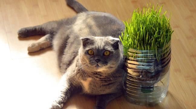 Calcul des portions, choix des aliments… Comment prendre en charge le surpoids de son chat ?