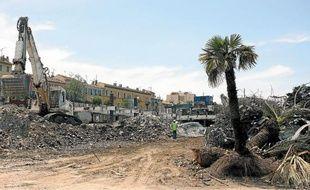 Au milieu des gravats, les grands palmiers seront bientôt transférés à la pépinière municipale.