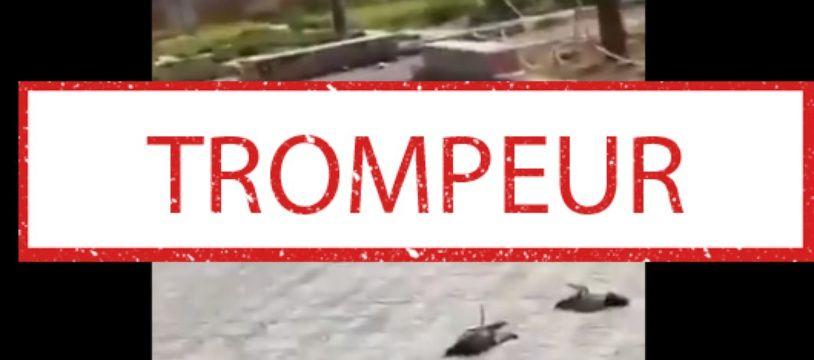 Un extrait de la vidéo qui prétend montrer des pigeons tués par la 5G.