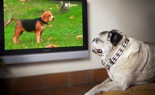 DogTV, accessible sur le canal 110 des box Orange depuis le 1er avril 2015