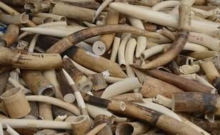 Illustration de défenses d'ivoire saisies.