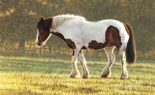Le poney a été retrouvé errant dans le quartier de l'Aiguillon à Arcachon.