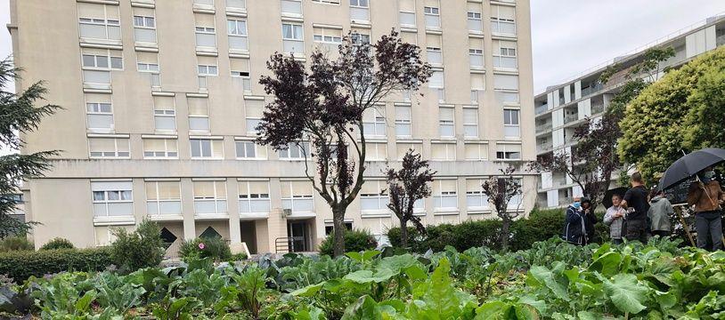 Le tout nouveau potager en libre-setvice des 182 locataires de la résidence Polygone à Toulouse, planté pendant le confinement.
