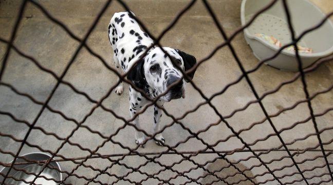 nord une trentaine de chiens saisis dans une animalerie de cambrai. Black Bedroom Furniture Sets. Home Design Ideas