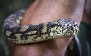 Un python (illustration).