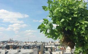 Les herbes aromatiques avec la start-up Aéromate poussent sur les toits de Paris (Illustration).