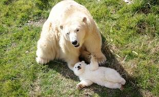 Le 9 mars dernier, la petite oursonne a découvert le monde extérieur pour la première fois.