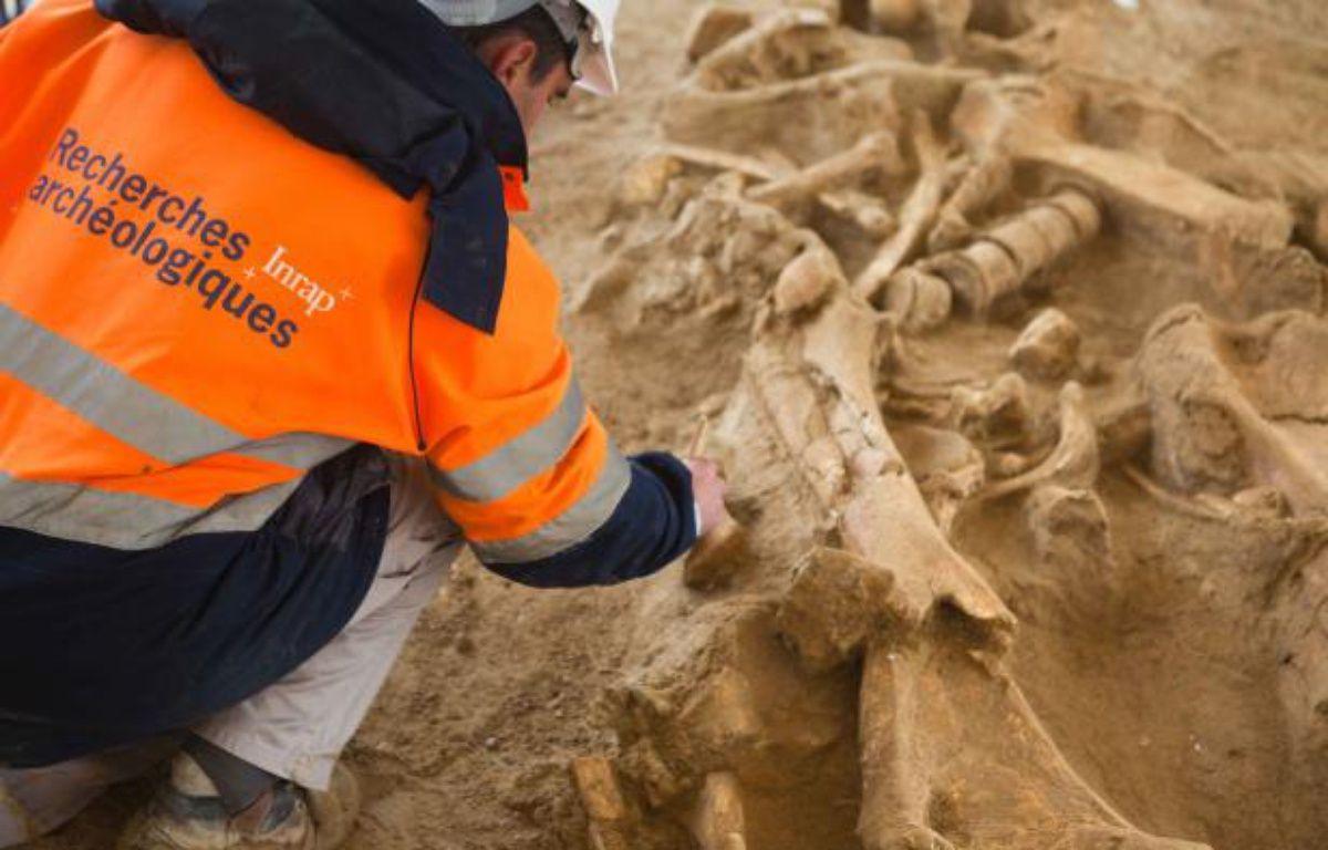 Un chercheur observe le squelette de mammouth retrouvé à Changis-sur-Marne le 6 novembre 2012 – LOIC VENANCE / AFP