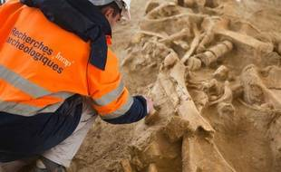 Un chercheur observe le squelette de mammouth retrouvé à Changis-sur-Marne le 6 novembre 2012