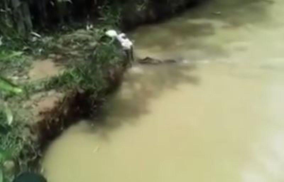 Des hommes jettent un chat vivant en pâture à des crocodiles au Pérou.  – Youtube
