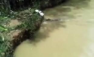 Des hommes jettent un chat vivant en pâture à des crocodiles au Pérou.