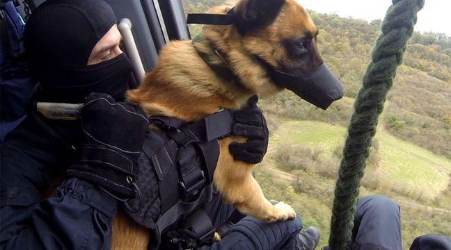Dammartin-en-Goële: «Les chiens du GIGN portaient des gilets pare ... - 20minutes.fr
