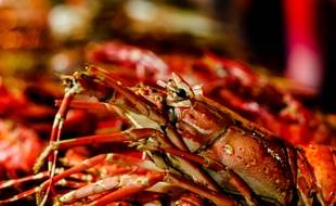 Bien que la consommation et la cuisson des homards soit un sujet de controverse, il est recommandé de les faire cuire  à la vapeur.